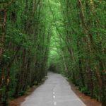 جنگل-دالخانی
